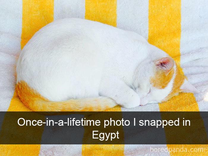 Cat-Snapchats-28-5d418931da6de__700