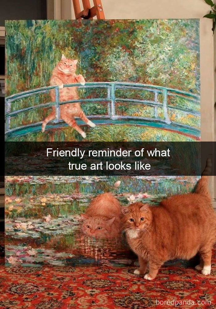 Cat-Snapchats-36-5d418ac0d1924__700