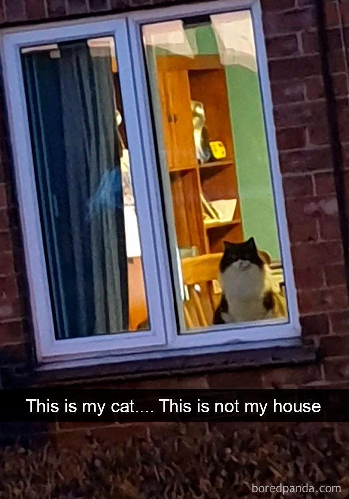 Cat-Snapchats-45-5d418c69bdd2f__700